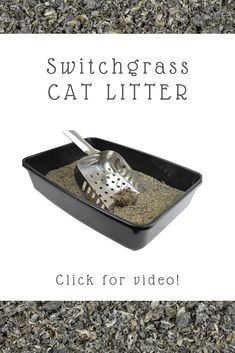 This all-natural litter is made of switchgrass, a natural plant that's cultivated with no pesticides or chemical sprays, so it's chemical-free and safe for the whole family. It also contains BioChar, a specially produced activated carbon that's made to be more absorbent so it traps urine and odors more effectively. The biodegradable, non-toxic formula has a strong clumping action and a special coating that makes it less dusty and messy, plus it's proudly made in the USA. | Affiliate. Natural Cat Litter, Clumping Cat Litter, Sprays, Biodegradable Products, Plant, Action, Strong, Cats, Nature
