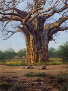 """At the Base of the Baobab"" by John Banovich, 40x30 Oil on Belgian Linen"