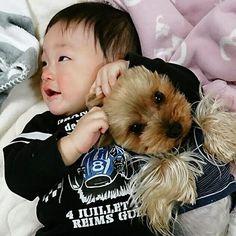 0歳~2歳ってお友達と一緒に遊ぶって感覚は無いみたいだけど、アンちゃん🐶と凛くん👦普通に毎日一緒にイチャイチャ遊んでる😆💓😁 #yorkshireterrier #yorkie #yorkshire #yorkelife #yorkieworld #yorkienation #yorkielovers #yorkiesofinstagram #terrier #doggy #cuteyorkie #dog #dogstagram #pet #yorkielove #instdog #わんこ #愛犬 #犬 #いぬ #ドッグ #ヨークシャーテリア #ヨーキー #ペット #赤ちゃん #赤ちゃんと犬 #baby #babyanddog #犬と子供 #生後10ヶ月