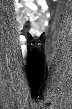 I know I brought my catnip ball up here yesterday. Did that crow take it?