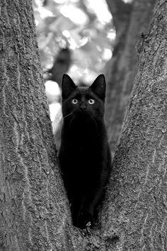 Beautiful black cat ✔