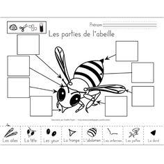 Fichier PDF téléchargeable En noir et blanc seulement 2 pages Les élèves doivent observer l'abeille et trouver les parties illustrées au bas de la page sur celle-ci pour les coller au bon endroit (avec le mot). La deuxième page est plus facile, avec les dessins déjà placés au bon endroit, il leur suffit de découper et de coller les images sur celles qui sont identiques.
