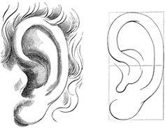 Sombrear oreja 1