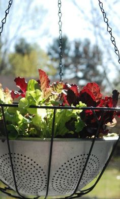 How to Make Lettuce Leaf Hanging Basket