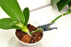 Cum se transplantează un pui de orhidee Potted Plants, Indoor Plants, Rare Orchids, Orchid Care, Balcony Garden, Small Gardens, Ikebana, Garden Tools, Flower Arrangements