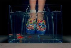 New trending GIF on Giphy. crazy fish wonder girls shoes bowl i feel you. Follow Me CooliPhone6Case on Twitter Facebook Google Instagram LinkedIn Blogger Tumblr Youtube