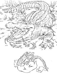 Pdf With Astonishing Animals Printable Animal Coloring Pictures Pages Baby Farm Page Pedia