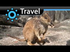 Queensland (Australia) Vacation Travel Wild Video Guide - http://bookcheaptravels.