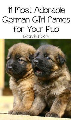 Need a name for your new hund? Check out 11 of the most adorable German girl dog names for your sweet welpe! Pet Names For Dogs, Puppies Names Female, Female Dog Names, Puppy Girl Names, Cute Puppy Names, Cute Names, Cutest Dog Names, Funny Girl Dog Names, Baby Names