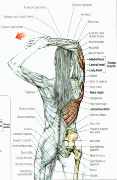 How to Stretch the Tricep Muscle