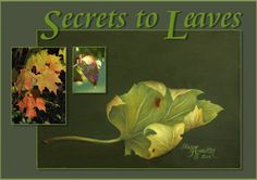 Painting Leaves - Painting Pattern - Art Apprentice Online - Sharon Hamilton