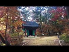 월정사 전나무숲길을 아침에 걸으며 A trail in the Woljeongsa Temple Fir Tree Forest, KOREA
