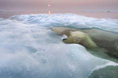 Polar bear underwater. Photograph by Paul Souders