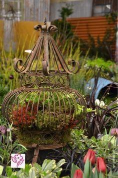I have the perfect birdcage for a fairy garden like this! Garden Show, Dream Garden, Garden Art, Garden Ideas, Rusty Garden, Garden Planters, Succulents Garden, Outdoor Landscaping, Outdoor Gardens