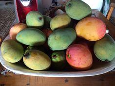 Temporadas de frutas! Verão PÉ