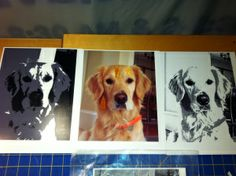 Dog Photo Portrait Quilt Tutorial | Sparky SF (San Francisco)