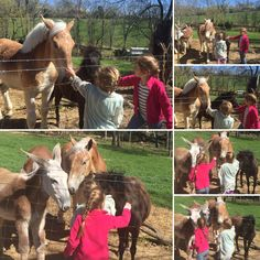 Sweetest girls came to see some of our colts. 💗🐴💗 Tennessee Walking Horse, Sweet Girls, Pony, Horses, Animals, Pony Horse, Animales, Animaux, Cute Girls