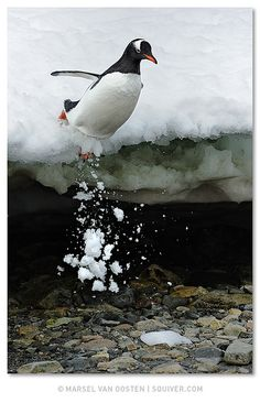 Falling by Marsel van Oosten, via Flickr