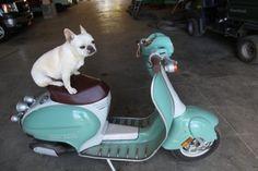 Blue Vespa And French Bulldog Vespa Martha Stewart Riding Gear