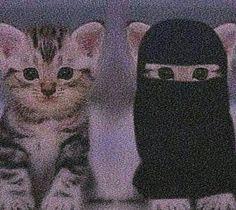 Cute Baby Cats, Kittens Cutest, Cute Babies, Girly Images, Cute Love Images, Mode Niqab, Muslim Images, Cute Cat Memes, Cute Muslim Couples