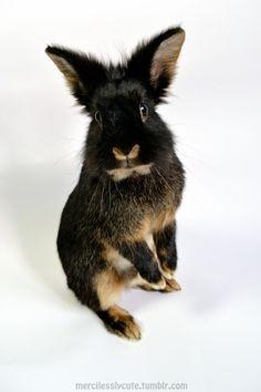 Bunnies :) pinned with #Bazaart - www.bazaart.me