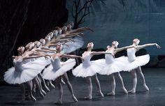 Historia del ballet El Lago de los Cisnes  | Lago de los cisnes Danza Ballet Body Ballet ballet clásico bailarinas