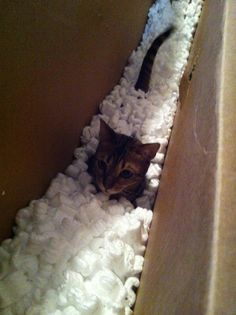 Cat in box full of packing peanuts.   ...........click here to find out more     http://googydog.com