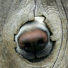 I smell a great day ahead! #greatday #nose #great