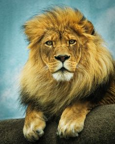 The King Watches Over His Kingdom! by Cathy Stolz on 500px