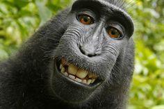 Diese Tiere haben sich vom Motiv zum Fotografen gemausert.