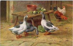 Vintage Postcard of Geese & Hens by the artist Edgar Hunt