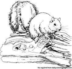 Petites bêtes et grosses bestioles : 100 coloriages créatifs: Amazon ...