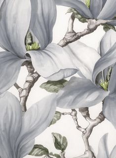 https://www.spektrum-farbe.de/decor-maison-kollektion-nature-vliestapete-magnolia-nat-3521.html
