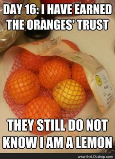 Day 17: I have earned the oranges' trust