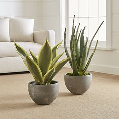 "Faux Plants | Crate and Barrel / Large Potted Plant H31"" x 20""Dia / Aloe Vera PlantH34.25"" x 13""Dia / Indoor use only, keep from sunlight / $149 each"