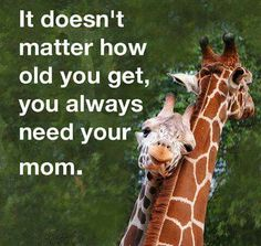 Slikovni rezultat za it doesn't matter how old you get, you always need your mom Mommy Quotes, All Quotes, Funny Quotes, Life Quotes, Mother Quotes, Random Quotes, Quotable Quotes, Family Quotes, Love You Mom