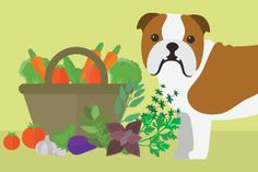 Courses - Dogs Naturally Magazine Academy