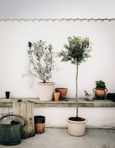 friday finds. Rooftop Garden, Balcony Garden, Garden Path, Outdoor Plants, Outdoor Gardens, Potted Plants, Olivier En Pot, Scandinavian Home, Garden Inspiration