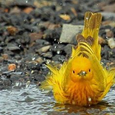 Hora do banho. Time for a bath Kinds Of Birds, All Birds, Little Birds, Love Birds, Pretty Birds, Beautiful Birds, Animals Beautiful, Cute Animals, Funny Animals