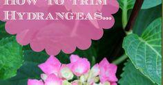 Elegant Nest: How to trim Hydrangeas…