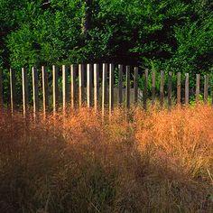 Oxshott Garden by Andy Sturgeon Landscape and Garden Design, Surrey