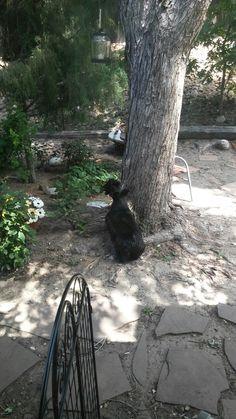Bella stalking a squirrel......