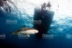 Shark Below the dive boat royalty-free stock photo