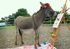 patty the donkey, pic-ass-o, painting rescue donkey Donkey Rescue, Donkey Donkey, Cute Donkey, Mini Donkey, Cute Baby Animals, Farm Animals, Funny Animals, Wild Animals, Burritos