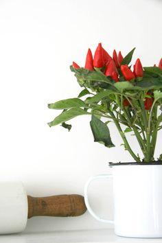 Urban Jungle Bloggers - Plant shelfie | Apartment Apothecary