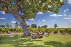 Highbank Vineyards in Coonawarra, South Australia   |   Highbank vineyard is a boutique organic vineyard known for its high quality vintages.