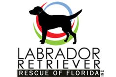 Labrador Retriever Rescue of Florida. Non-profit organization designed to match rescued labs from less than idyllic conditions with safe and loving homes. Lab Rescue, Animal Rescue, Black Lab Names, Labrador Retriever Rescue, Florida Holiday, Veterinary Care, State Of Florida, Pet Adoption, The Fosters