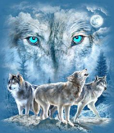 Loups. Wolves.