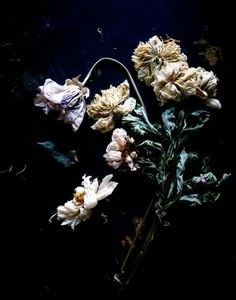 Dark Moody Winter Florals