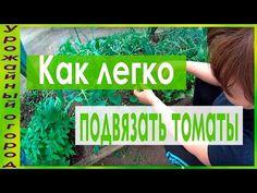 УДОБНАЯ ПОДВЯЗКА И ПАСЫНКОВАНИЕ ТОМАТОВ!ПЕРВЫЕ ШАГИ! - YouTube